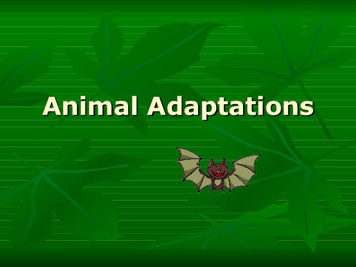 animal-adaptations-1-728