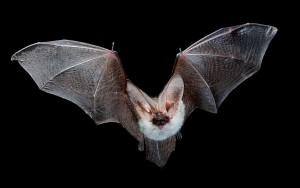 bat120115