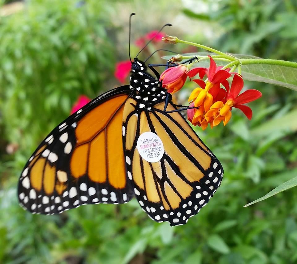 monarch-karla-mcgrail