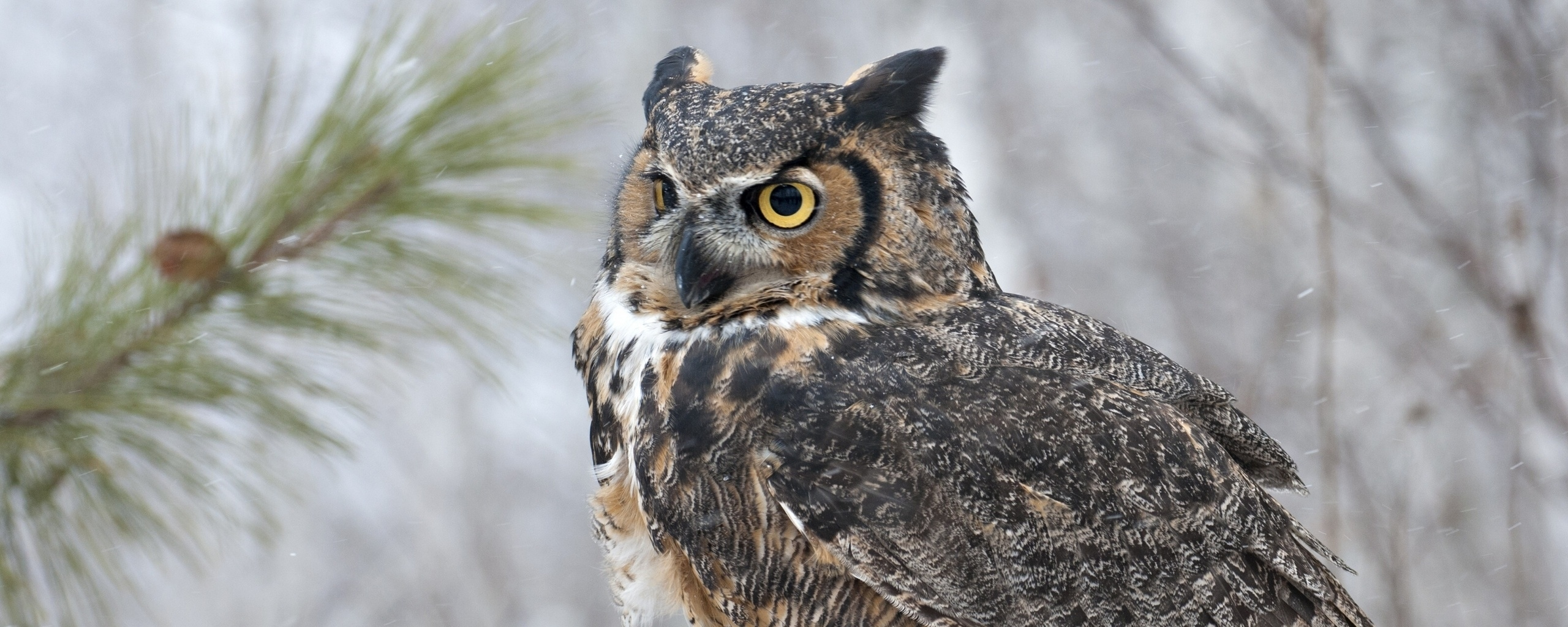 owl_bird_snow_73888_2560x1024