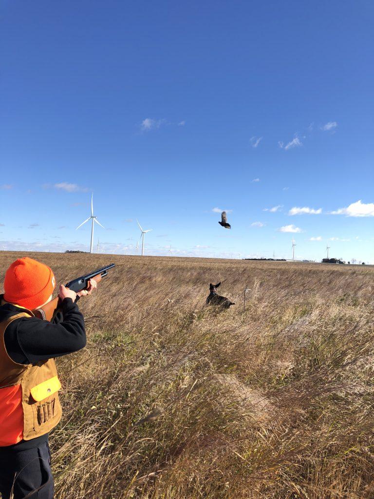 youth pheasant hunt 004