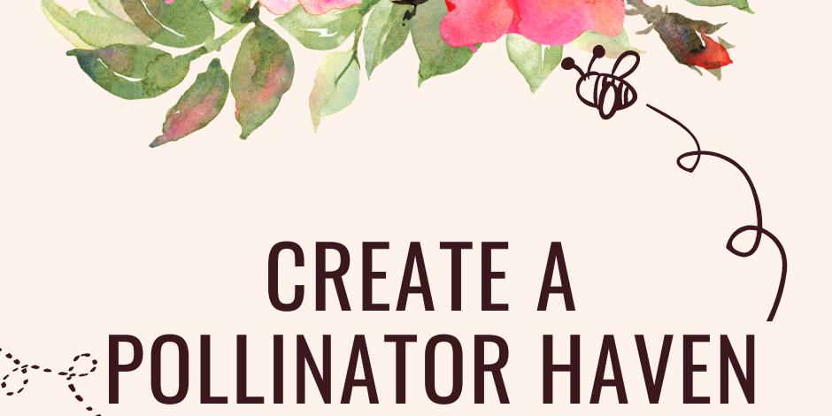Create a Pollinator haven